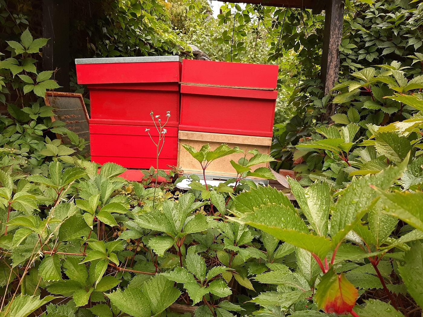 Bijenkasten in de abdijtuin